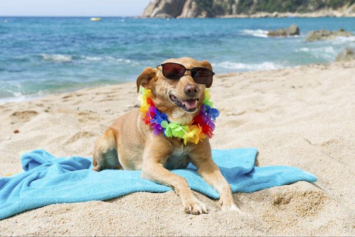 vacaciones-con-perro-playa