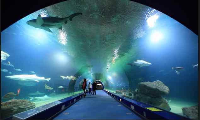 entrada oceanografic valencia