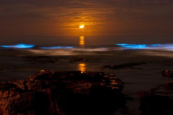 fitoplancton bioluminiscente en San Diego