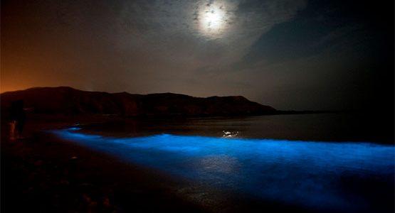 Bioluminiscencia: 5 lugares mágicos donde el mar se enciende por la noche